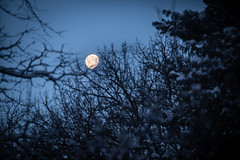 More Snow (Phil Roeder) Tags: desmoines iowa snow winter nature weather canon6d canonef70200mmf4lusm moon