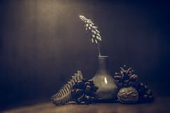 Yet to be decided (Christina Draper) Tags: green stilllife creative mood pine cones vase shadows texture tones
