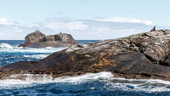 IMG_8359.jpg (niklasdd) Tags: oceania meer water southisland fjordlandnationalpark flickr clouds fjord newzealand sea rocks wasser ozeanien doubtfulsound neuseeland berge mountains felsen sommerurlaub18 wolken nationalpark