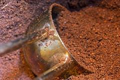 Italian Ground coffee (christina.marsh25) Tags: coffee italian groundcoffee cafetiere scoop brown morning brew macromondays
