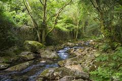 Con morriña..!! (Camelia-5) Tags: río arboles bosque coruña
