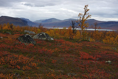 2018 / Day 8 / Autumn tundra landscape at Gåbddåjávrre lake (Northern Adventures) Tags: sarek sweden sverige sareknationalpark nationalpark landscape scenery scenic trip exploration journey outdoors outdoor adventure wandering path footpath trail autumn fall september hike hiking walk walking trek trekking track tracking backpacking sápmi sapmi lappland lapland lappi lap