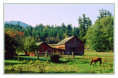 Farm Life - Washington's Olympic Peninsula, 1992 (sjb4photos) Tags: washington olympicpeninsula epsonv500 farm horse