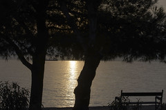 Shadows in twilight (miroslav0108) Tags: trees bench seaview sunset shadows