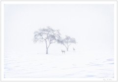 Two & Two (Ping...) Tags: minimalism tree deer fog snow michigan