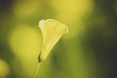 yellow [Day 3724]