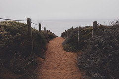 Hey Butterfly (gabyuchi1) Tags: beach moody gloomy color fly butterfly water lonely alone walkway sanfrancisco