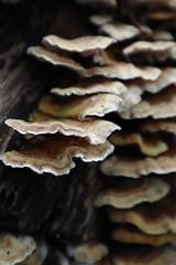 Fotowandeling Zoetermeer (29) (Liekesfotos) Tags: natuur nature nederland netherlands zuidholland zoetermeer paddestoel mushroom fungus bos forest