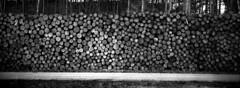 Logged Up (selyfriday) Tags: selyfriday wwwnassiocomempty nassiocom hasselblad xpan panorama film 45mmf4 35mm analogue wide rodinal 125 7minutes 20˙c ko daktmax400 400iso kodak tmax400 tmax logs woods schoorl netherlands nederland dutch holland