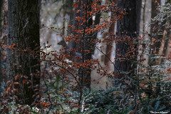 A deer! (Eric James McDermott Photography) Tags: deer animals