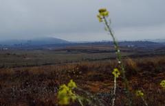 (╰☆Kristen) Tags: spain españa madrid elmolar macro dof depthoffield nikon nikond3300 nikonphotography 1855mm closeup rain mist mountains landscape