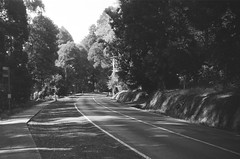 Mount Dandenong Tourist Road (3) (Matthew Paul Argall) Tags: spartus35fmodel400 35mmfilm blackandwhite blackandwhitefilm kentmerepan100 100isofilm road street mountdandenongtouristroad