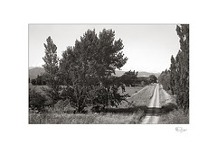 South Featherston (radspix) Tags: yashica 230af af 3570mm f3345 macro ilford fp4 plus pmk pyro