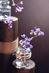 """""""Wild flowers"""" (mariajoseuriospastor) Tags: stilllife bodegon flowers lilas wildflowers"""