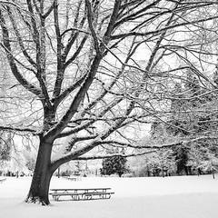 Unrealized Potential (Aaron Bieleck) Tags: hasselblad500cm 120film analog 6x6 square film filmisnotdead hasselblad mediumformat wlvf snow winter pdx portland bw blackandwhite 60mmct duniwaypark