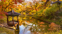Autumn atmosphere in the Secret Garden (Seoul) (patuffel) Tags: huwon secret garden seoul south korea autumn foliage 2018 red leaf pond reflection tree trees leica m10 summicron 28mm leaves