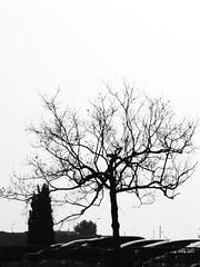 Trees & Cars - Composition (zeevveez) Tags: זאבברקן zeevveez zeevbarkan canon bw car composition
