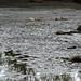 Lake Shafer, Summer 2008
