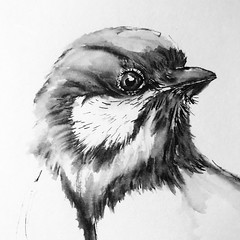 B191-365 one bird a day - B&W Bird 9 (www.doortje.nl) Tags: vogel pájaro uccello passarinho طائر oiseau птица birdo voël 鸟 doortjenl 1tekeningperdagnl pen ink lamy fountainpen black white