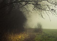 Clarity (Netsrak) Tags: baum eu eifel europa europe forst landschaft natur nebel rheinland rhineland wald fog forest mist nature trees winter woods bäume