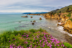The Cliffs of Shell Beach (Mimi Ditchie) Tags: california pacificocean shellbeach cliffs coastline flowers ocean