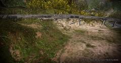 Summer Textures - Vita 3D ground Textures (☀Vita Camino☀) Tags: textures vita camino sl second life 3d sim terrain