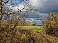 Champs de l'Orléanais sous les nuages (Livith Muse) Tags: champ nuage arbre chemin saintcyrenval centre france fra samsung galaxy s7 cloud field tree path smartphone orléanais