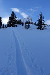 Skiing at Hilda Ridge (*Andrea B) Tags: hilda ridge hildaridge ski skiing skitouring jaspernationalpark december 2018 december2018 backcountry winter alberta rockymountains rockies