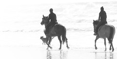 Follow the light ! (Le.Patou) Tags: challenge crazytuesday blackandwhite aquitaine médoc vensac beach plage sea ocean wave horse ride highkey backlight light bnw rider girl people chevauchée contrejour nb noiretblanc fz1000