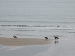 Horse Riders Newquay (occama) Tags: horses beach newquay cornwall sea surf water waves spring march 2019