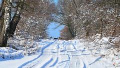 Meeting on the road (Szymon Karkowski) Tags: outdoor winter snow nature roe roeders roeder tree trees road meeting silesian voivodeship gliwice poland nikon d7100