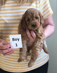 Baby Boy 1 3-30