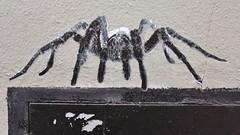 Dr Bergman_5278 rue Berthe Paris 18 (meuh1246) Tags: streetart paris animaux drbergman rueberthe paris18 buttemontmartre araignée
