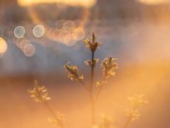 See you tomorrow (bolex.ua) Tags: outdoor sun sunset light plant shining shiny spring shadows flares солнце закат блики свет дерево весна helios