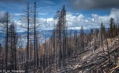 Cover-up National Park (TI_in_Yosemite) Tags: yosemitenationalpark toxicyosemite workplacemobbing communitystalking gangstalking harassment intimidation bullying hatred mobbing corruption coverup fraud waste nikond600 bowersamyang35mm14 photomatixpro6 lightroomcc
