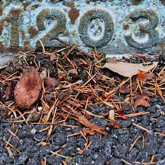 1203 (Leo Reynolds) Tags: cemetery cemeterymountjerome number groupmjcemetery canon eos 350d 001sec f56 iso200 56mm 0ev xleol30x hpexif xx2006xx 1203 1000s xxthousandsxx xsquarex xratio1x1x