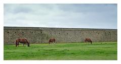 Pointe Saint Mathieu (Bruno 2919) Tags: france bretagne finistère borddemer pointesaintmathieu pierres chevaux