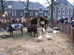 Kerststal in Dordrecht (Dimormar!) Tags: kerststal dordrecht levendekerststal christmas