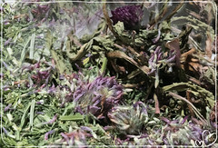 eye candy (LavenderMillie) Tags: herbs tea digestion color light macro lavendermillie2019 apothecary