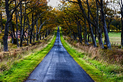Threipmuir 12 Oct 2016-0082.jpg (JamesPDeans.co.uk) Tags: autumn forthemanwhohaseverything landscape edinburgh season gb printsforsale roads unitedkingdom road scotland britain avenue vanishingpoint wwwjamespdeanscouk lothian greatbritain europe landscapeforwalls jamespdeansphotography uk digitaldownloadsforlicence