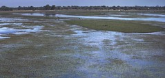 Botswana delta de l'okawango (Micheline Canal) Tags: afrique australe botswana enfant child okawan case