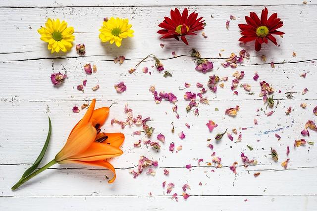 Обои цветы, colorful, wood, flowers, composition, floral картинки на рабочий стол, раздел цветы - скачать