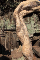 Tree root growing on temple, Ta Prohm, Angkor (Mikey Stephens) Tags: taprohm angkor temple cambodia tree growing root