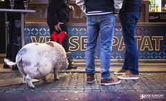 Verse patat (totaalfoto.nl) Tags: varken patat friet bram ladage delft pijnepoort