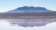 Laguna Colorada, Bolivia (Ben-ah) Tags: juriques mountain volcanoes jamessflamingo flamingo lagoon lake reflection bolivia eduardoavaroaandeanfaunanationalreserve travelphotography