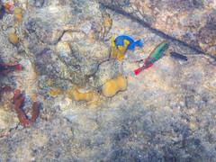 DCL March 2019 Tortola Underwater-37-2.jpg (Rhinodad) Tags: disneycruise disneyfantasy tuesday underwater 2019 dcl tortola britishvirginislands vg