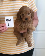 Baby Girl 3 3-30