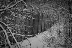 8.01.2019 (Kosmi88) Tags: winter podzim zima 2019 styczeń january nikon snow śnieg 5300 d5300 poland głowno las forest wall