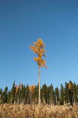 (Perahke) Tags: blue sky tree autumn slovakia canon high tatra štrbské pleso daylight