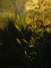 The Glowing Flax (Steve Taylor (Photography)) Tags: digitalart green brown yellow newzealand nz southisland canterbury christchurch dunes grass leaves seed tree cabbagetree glow autumn dawn sunrise sunny sunshine newbrighton